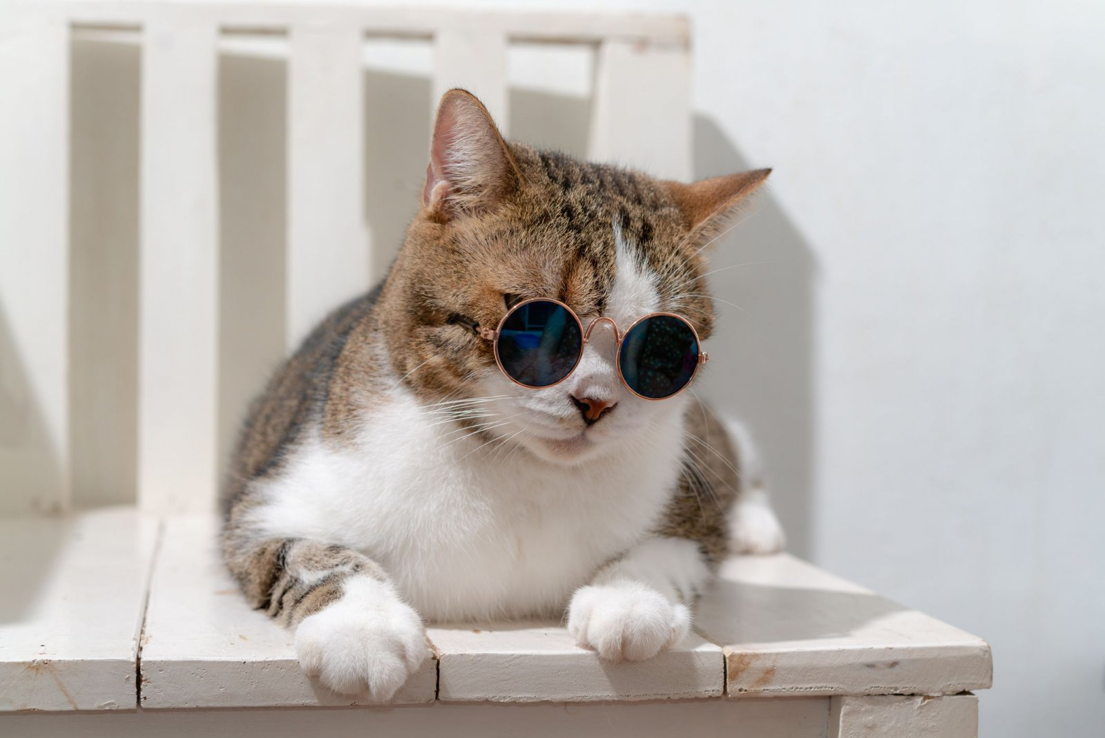 close-up-of-cat-wearing-sunglasses-while-sitting-royalty-free-image-1571755145.jpg